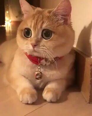 www.chokran.c.la images insolites et drôles: 50 funny cat memes pictures