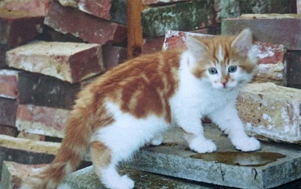 32e anniversaire d'un chat