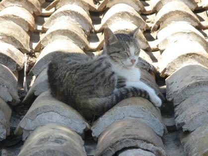 07 - Des chats sur les toits