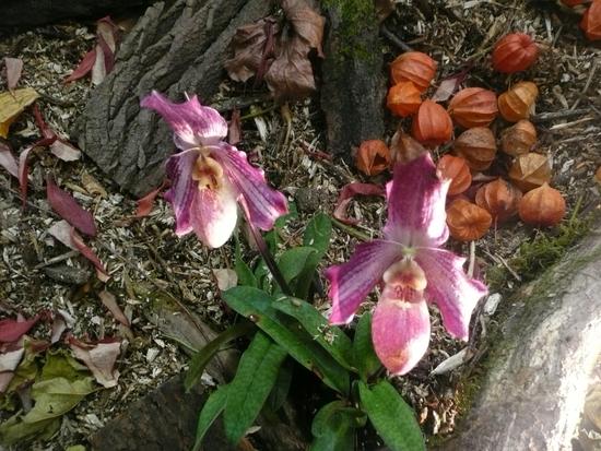 2013-Expo orchid Pont sainte Marie 008