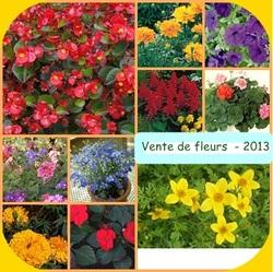 Vente de fleurs à repiquer 2013