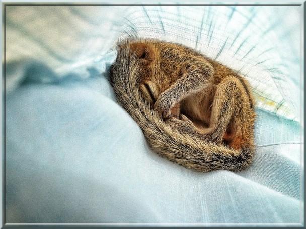 Un bébé écureuil sauvé par un journaliste de la BBC