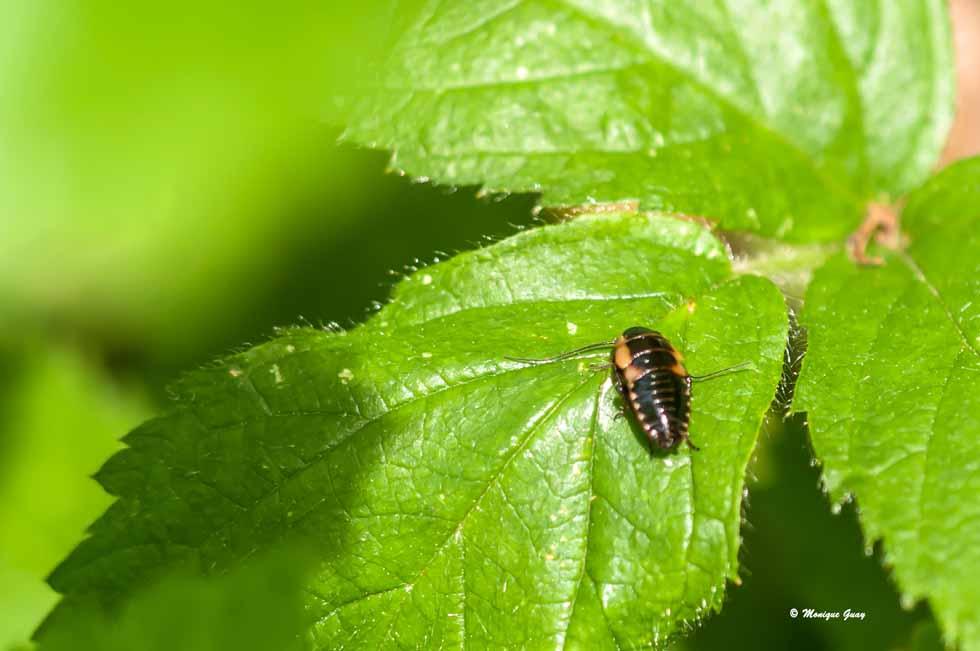 Larve de coléoptère