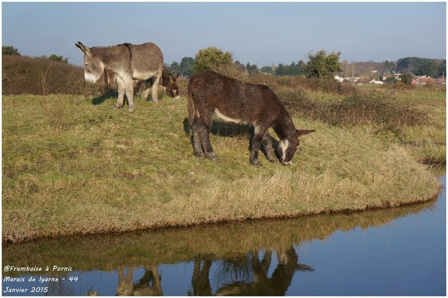 Marais de Lyarne - Janvier 2015