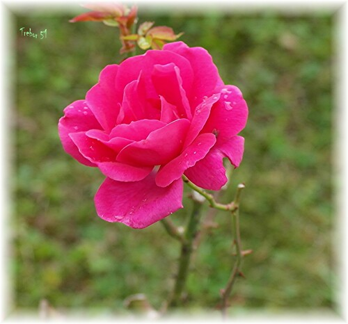 Les dernieres fleurs du jardin....?