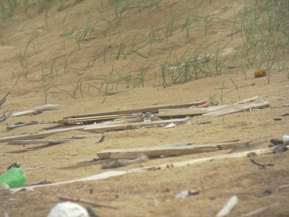 Nettoyage de plage : une vraie fausse bonnée idée.