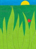 Le coquelicot seul dans son champ