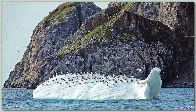Sous-marin polaire et avec tout son équipage sur le pont - Coburg Island - Baffin Bay - Nunavut - Canada