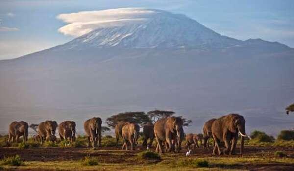 Les Etats-Unis autorisent de nouveau l'importation de trophées de chasse à l'éléphant et au lion