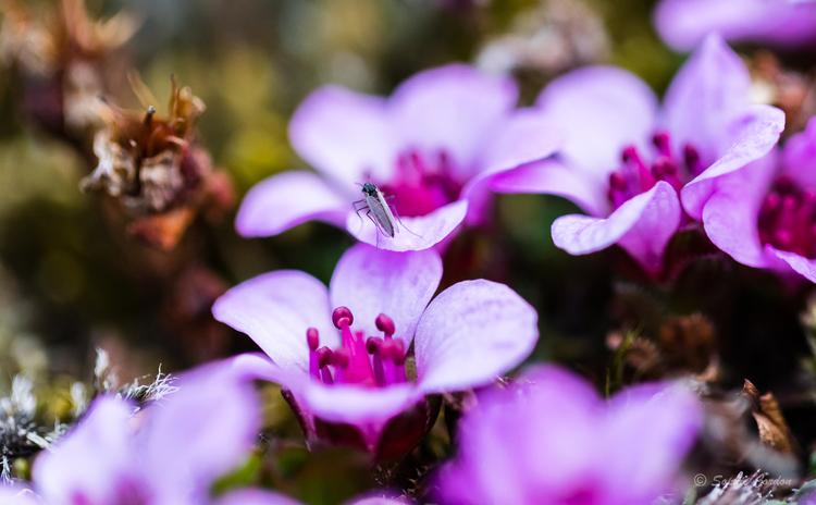 Blomsterdalshøgda