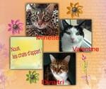 Dimitri, Valentine et Minette, nos copains
