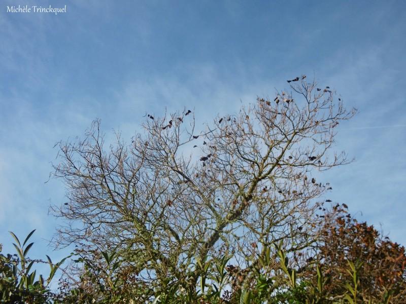 Une petite balade dans mon village, le 25 novembre...