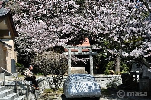 printemps à Fukuoka