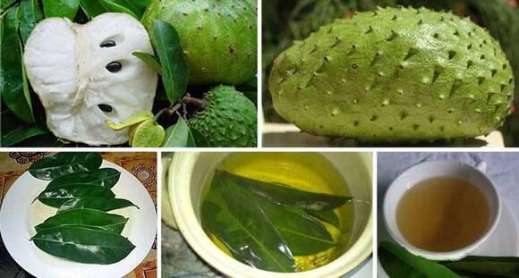 Les feuilles de corossol sont 1000 fois plus fortes pour tuer les cellules cancéreuses !