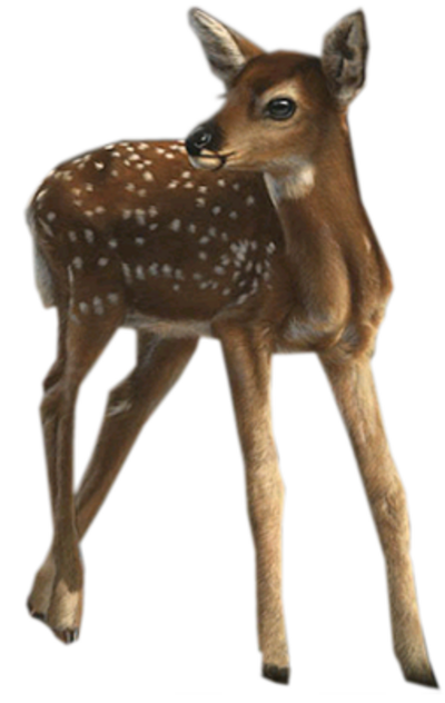 Animaux de la forêt 1