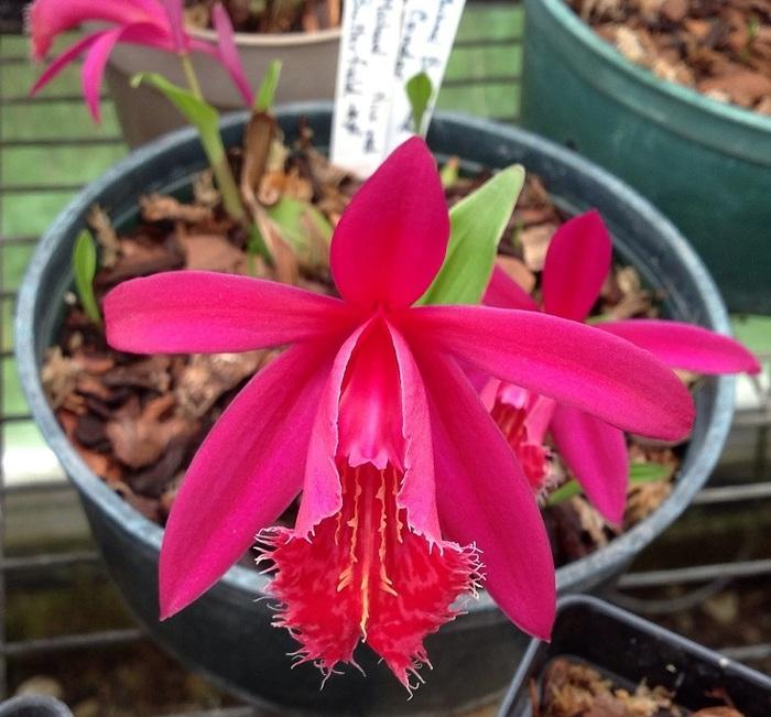 De jolies fleurs pour accueillir le printemps dans votre jardin
