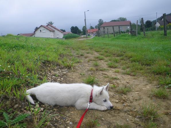 8 semaines: Première promenade en laisse