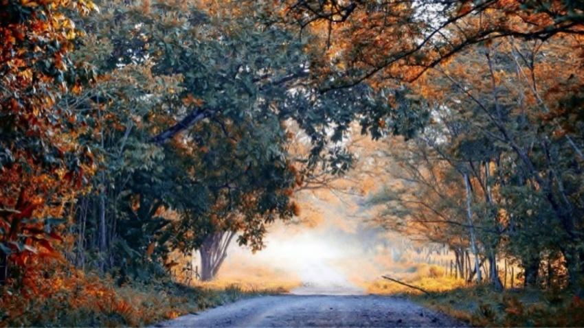 fraîcheur automnale ,ces saisons que j'aime ,l'automne nous fait voir de belles  couleurs