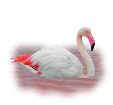 Tube Flamant rose