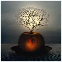 N° 58 : Croquons la pomme