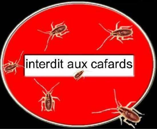 Comment Faire Pour Tuer Les Cafards comment ne plus avoir de cafards (blattes) 100% efficace - tout pour