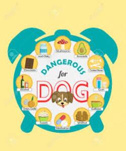 -Attention aliments nocifs pour votre chien.....et l'humour du jour......