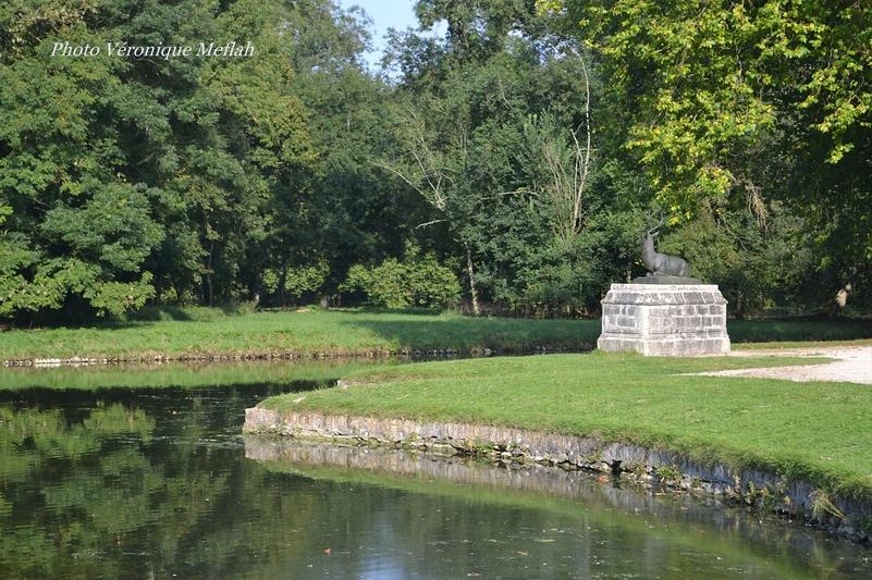 Domaine de Rambouillet : Les cerfs