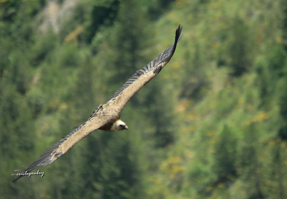 Vols en Drôme Provençale