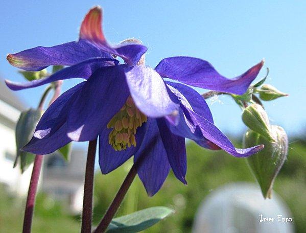 Fleurs-3320.JPG