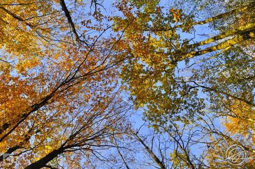 0126_automne_02.jpg