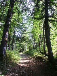 sentier forest