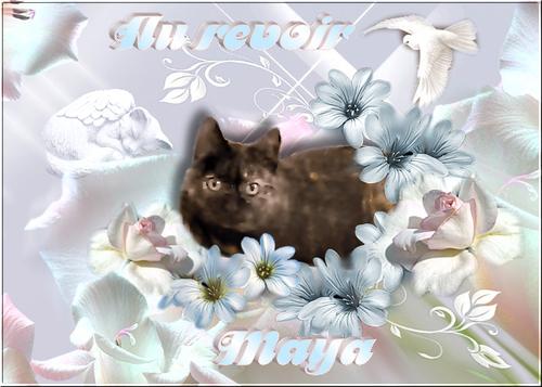 Au revoir petite Maya