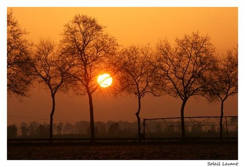 Soleil Levant dans les Landes