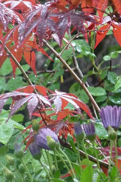Au jardin sous la pluie !!!!!
