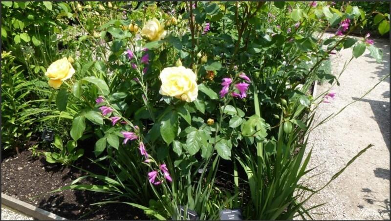 Jardin de l'odorat (7)