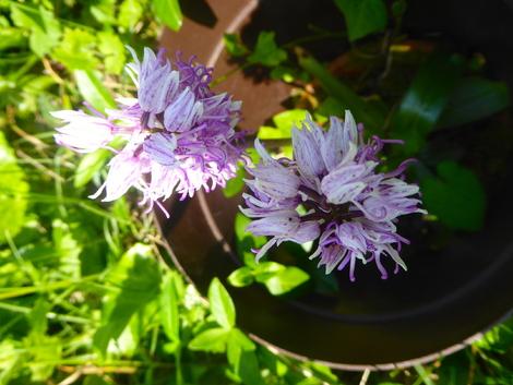 Des aromates aux fleurs!