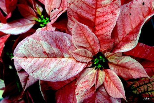 Des feuilles aux belles couleurs !
