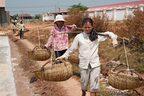 Salines de Kampot