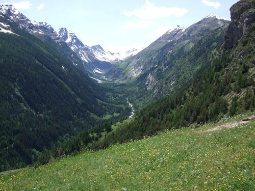 Animaux des montagnes- Chalet d'alpage-Vallon du Fournel