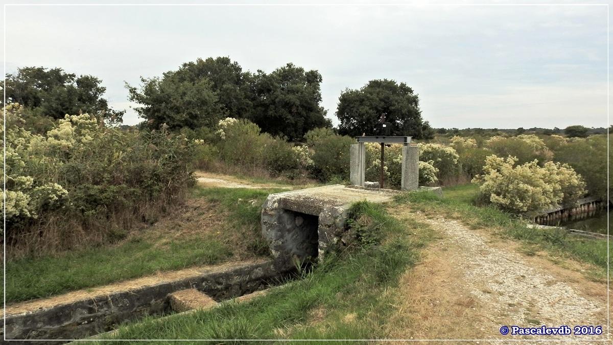 Plaines du Teich et domaine de Fleury - Octobre 2016 - 5/13