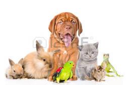 attention aux plantes toxiques pour votre animal de compagnie !