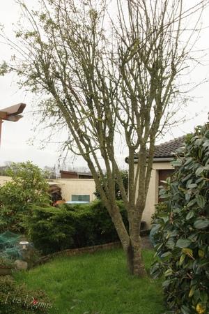 Auprès de mon arbre ....