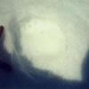 Ours brun (Ursus arctos) trace sur la neige