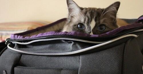 Faire garder son chat pendant les vacances