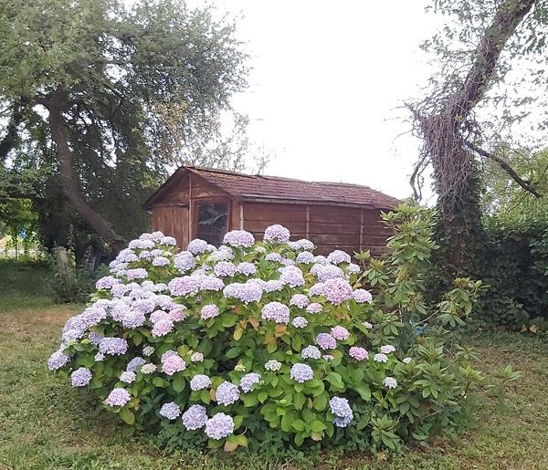 La petite cabane aux hortensias