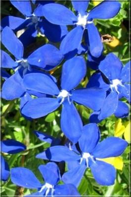 14-7 bleu