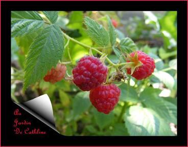 Jardiner avec la lune du 21 au 30 Juin