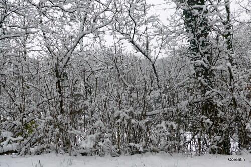 Temps de neige (1)
