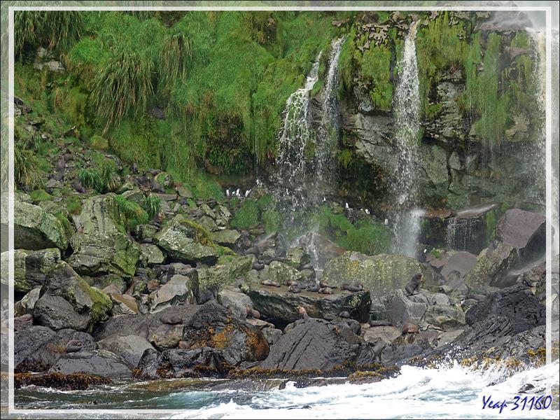 Autour de la cascade de Raised Beach - Gough Island - Tristan da Cunha