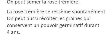 ** Les ROSES TREMIERES du LITORAL ATLANTIQUE.**